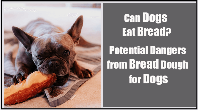 Can Dogs Eat Bread