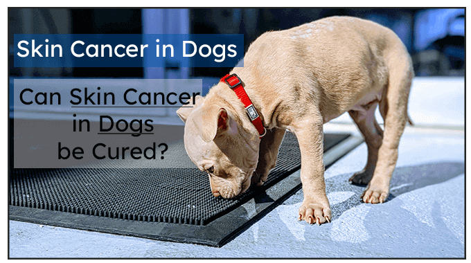 Can Skin Cancer in Dogs be cured