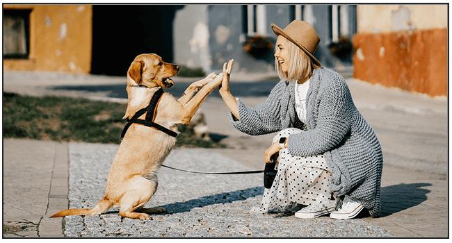 Dog Pet Insurance Review