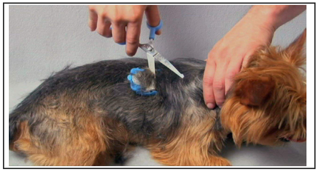 Best Dog Grooming Scissors Buying Guide