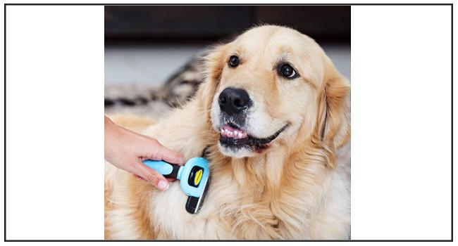 Pet Neat Best Dog Shedding Brush